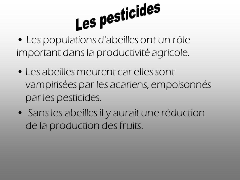 Les abeilles meurent car elles sont vampirisées par les acariens, empoisonnés par les pesticides. Sans les abeilles il y aurait une réduction de la pr