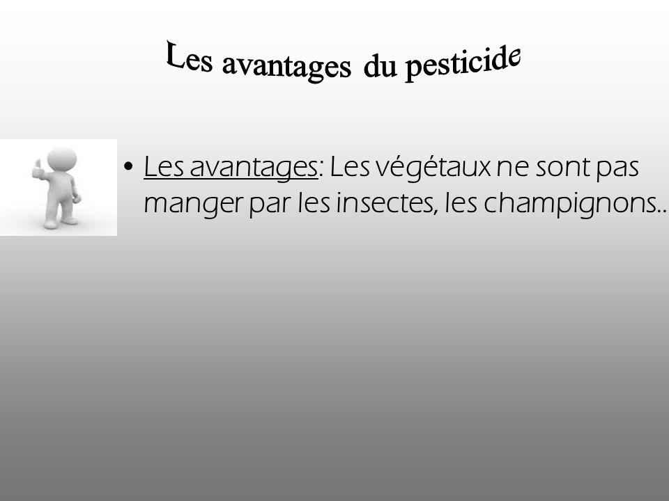 Les avantages: Les végétaux ne sont pas manger par les insectes, les champignons…