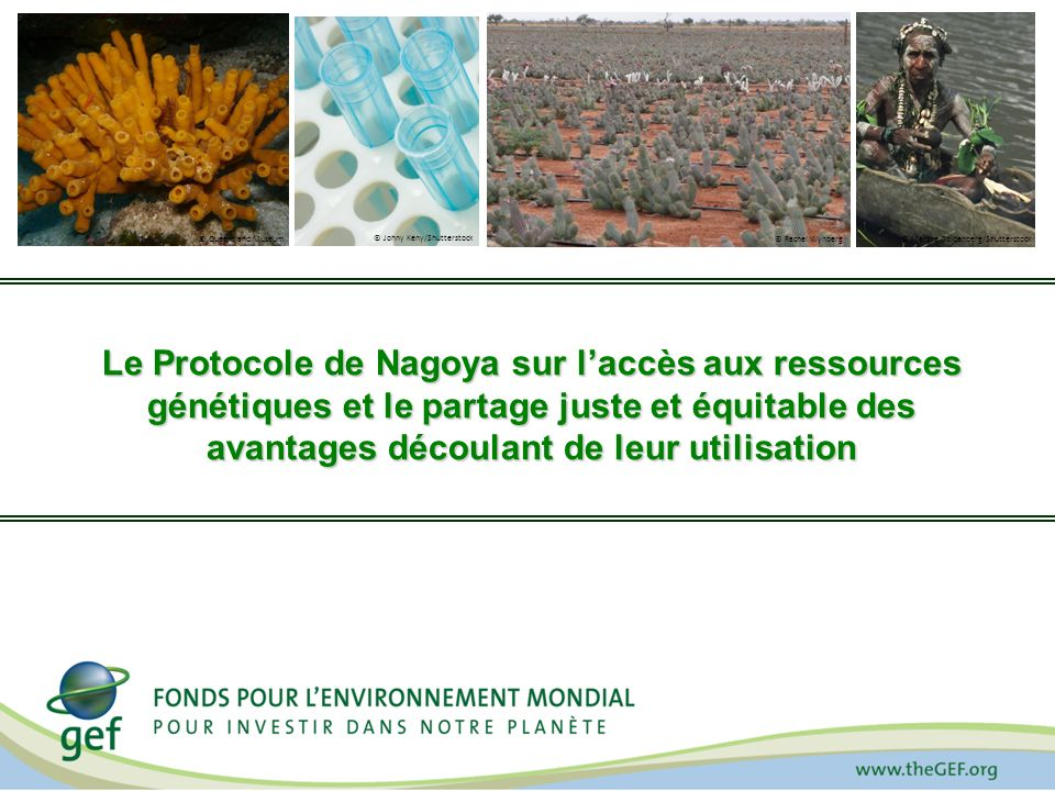 Le Protocole de Nagoya sur laccès aux ressources génétiques et le partage juste et équitable des avantages découlant de leur utilisation © Johny Keny/