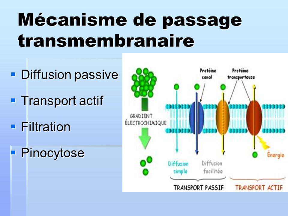 Mécanisme de passage transmembranaire Diffusion passive Diffusion passive Transport actif Transport actif Filtration Filtration Pinocytose Pinocytose
