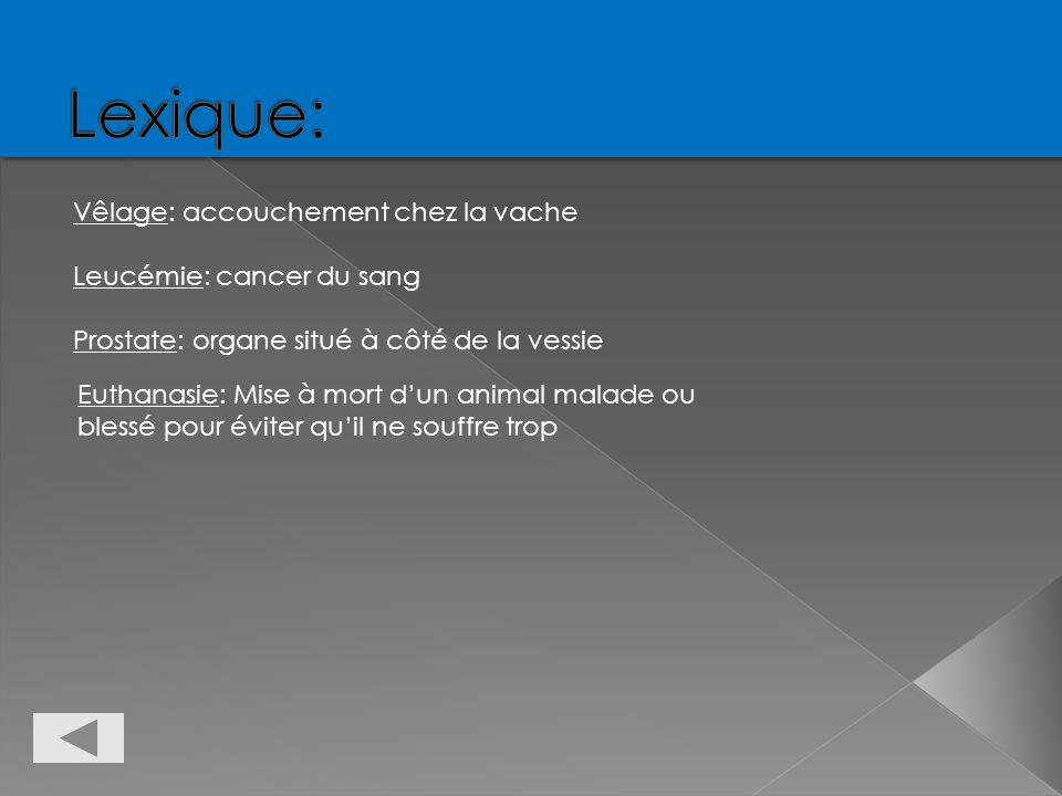 Vêlage: accouchement chez la vache Leucémie: cancer du sang Prostate: organe situé à côté de la vessie Euthanasie: Mise à mort dun animal malade ou bl
