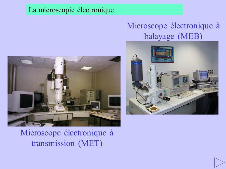 Microscope électronique à transmission (MET) Microscope électronique à balayage (MEB) La microscopie électronique