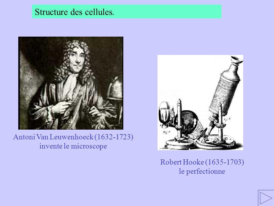 Antoni Van Leuwenhoeck (1632-1723) invente le microscope Robert Hooke (1635-1703) le perfectionne Structure des cellules.