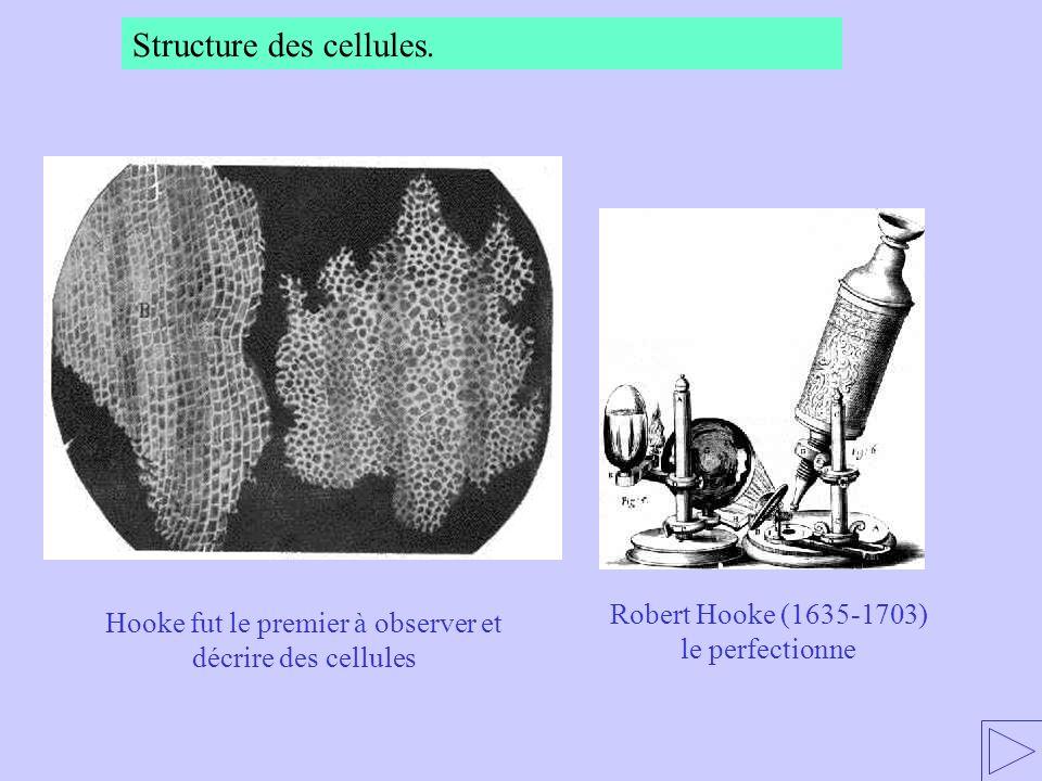 Hooke fut le premier à observer et décrire des cellules Robert Hooke (1635-1703) le perfectionne Structure des cellules.