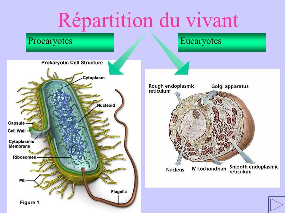 ProcaryotesEucaryotes Répartition du vivant