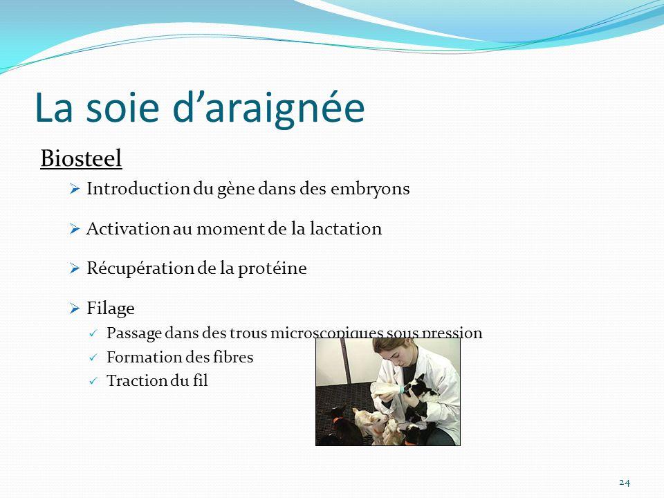 24 La soie daraignée Biosteel Introduction du gène dans des embryons Activation au moment de la lactation Récupération de la protéine Filage Passage d