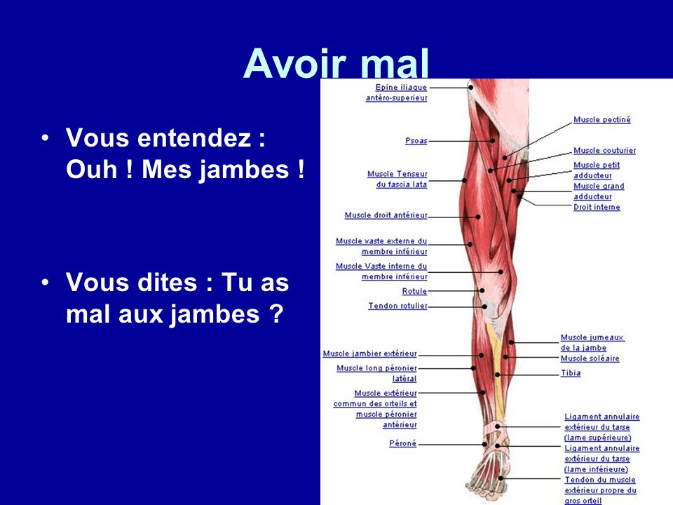 Avoir mal Vous entendez : Ouh ! Mes jambes ! Vous dites : Tu as mal aux jambes