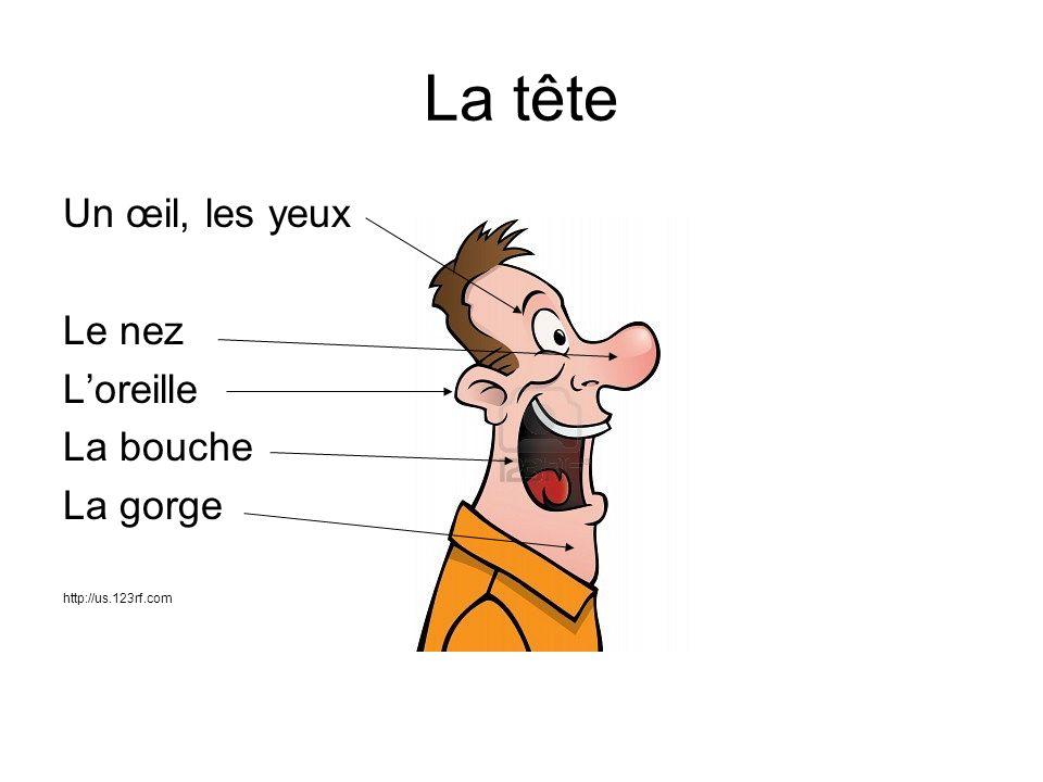 La tête Un œil, les yeux Le nez Loreille La bouche La gorge http://us.123rf.com