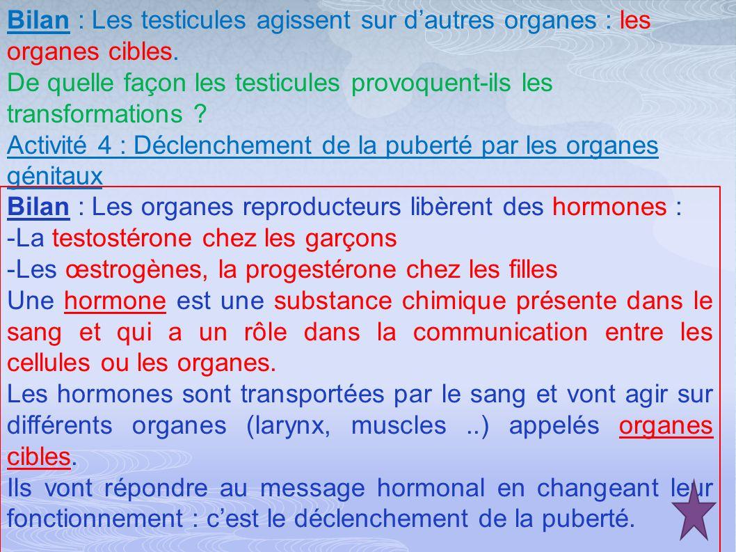 Testicules Testostérone Agissent sur Organes cibles : Larynx, muscles, cordes vocales….