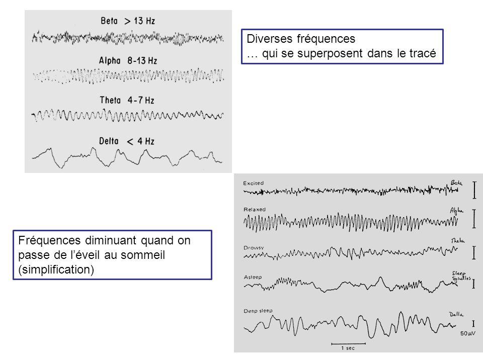 Diverses fréquences … qui se superposent dans le tracé Fréquences diminuant quand on passe de léveil au sommeil (simplification)