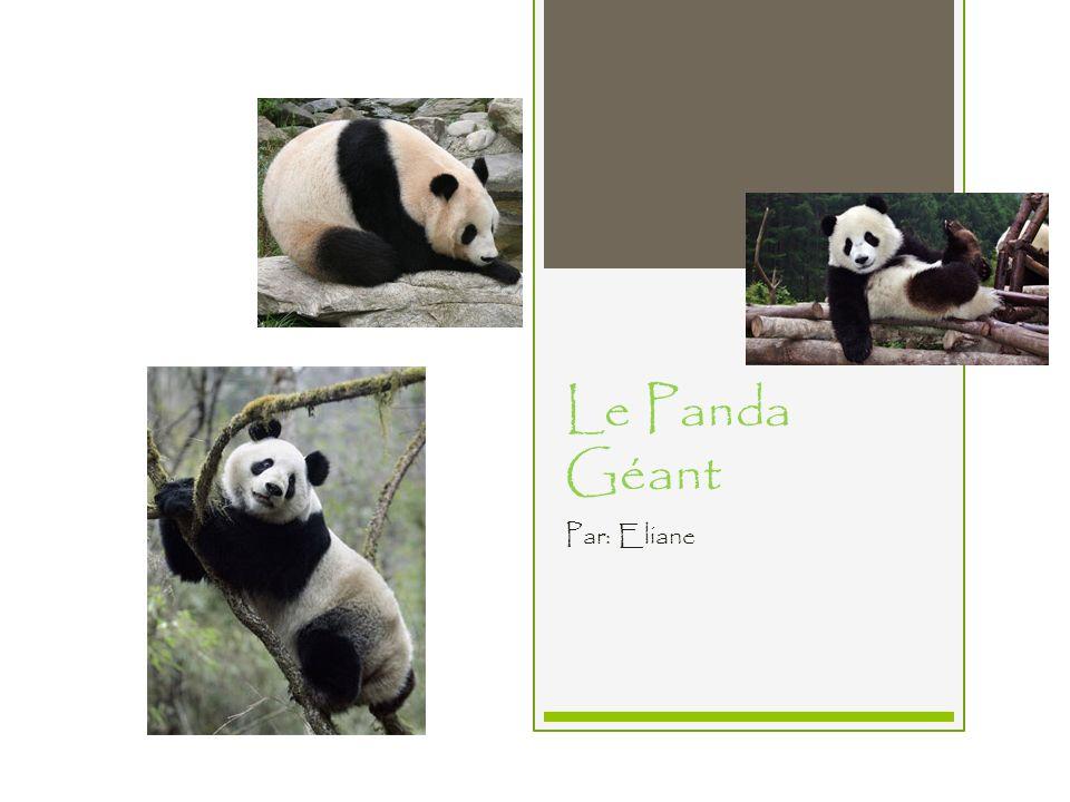 Le Panda Géant Par: Eliane