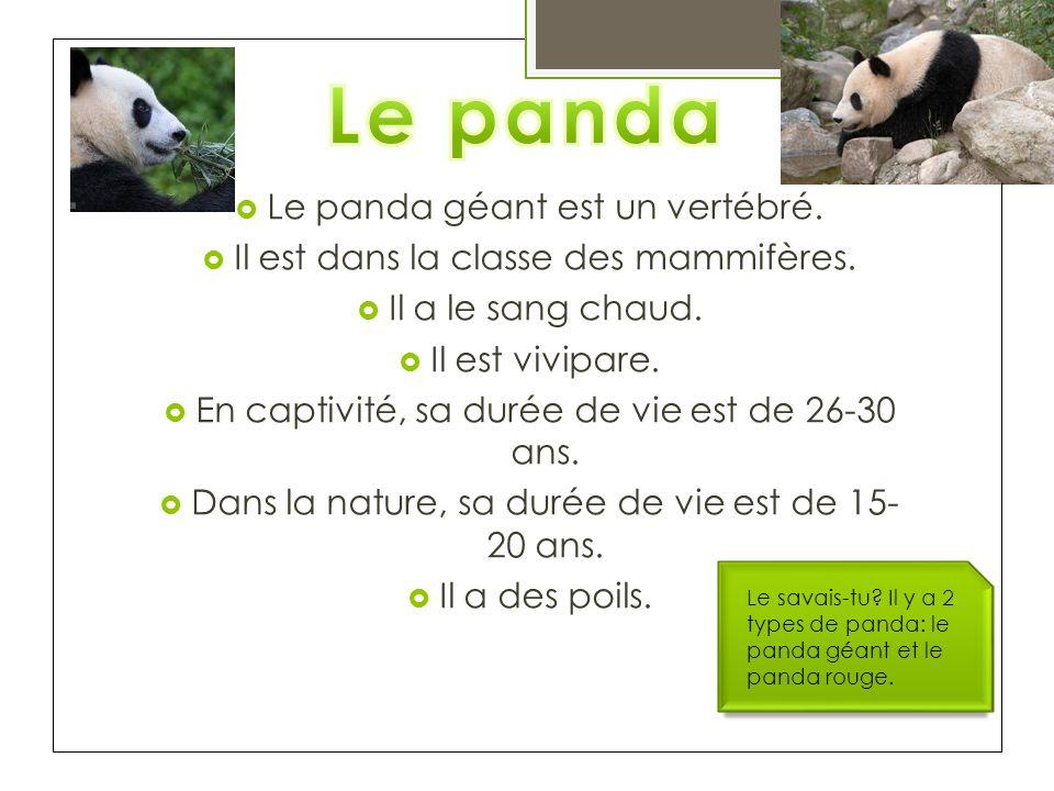 Le panda géant est un vertébré. Il est dans la classe des mammifères. Il a le sang chaud. Il est vivipare. En captivité, sa durée de vie est de 26-30