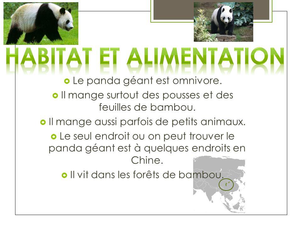 Le panda géant est omnivore. Il mange surtout des pousses et des feuilles de bambou. Il mange aussi parfois de petits animaux. Le seul endroit ou on p