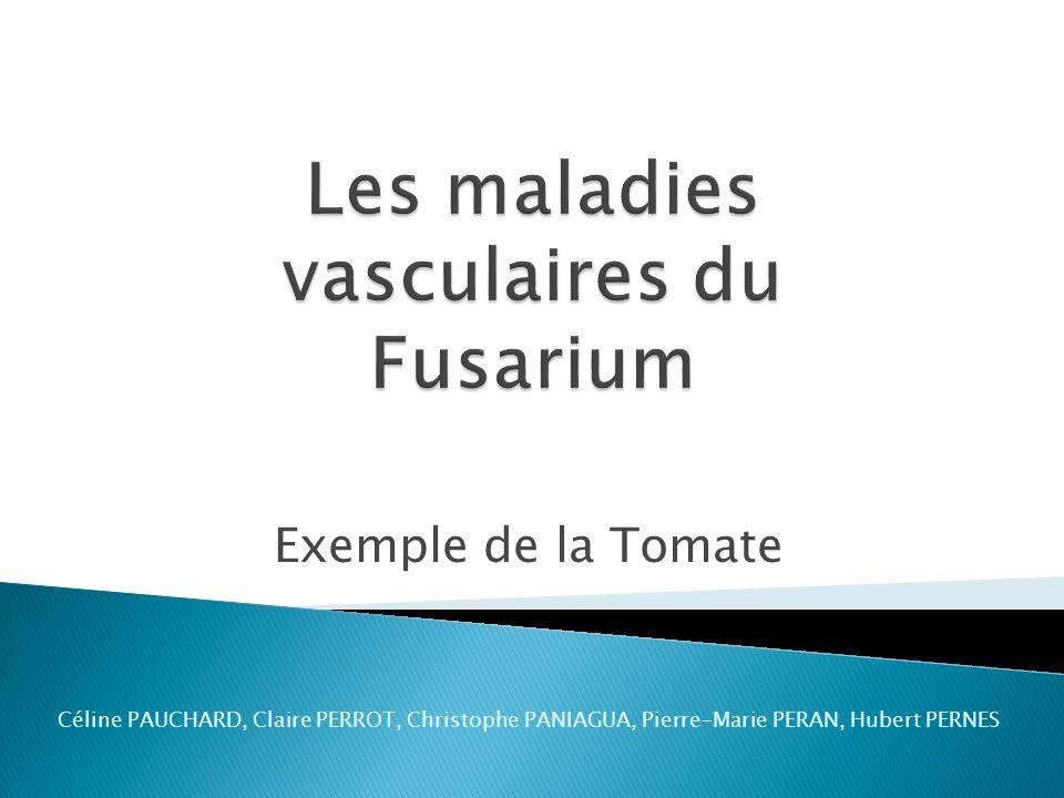 Exemple de la Tomate Céline PAUCHARD, Claire PERROT, Christophe PANIAGUA, Pierre-Marie PERAN, Hubert PERNES