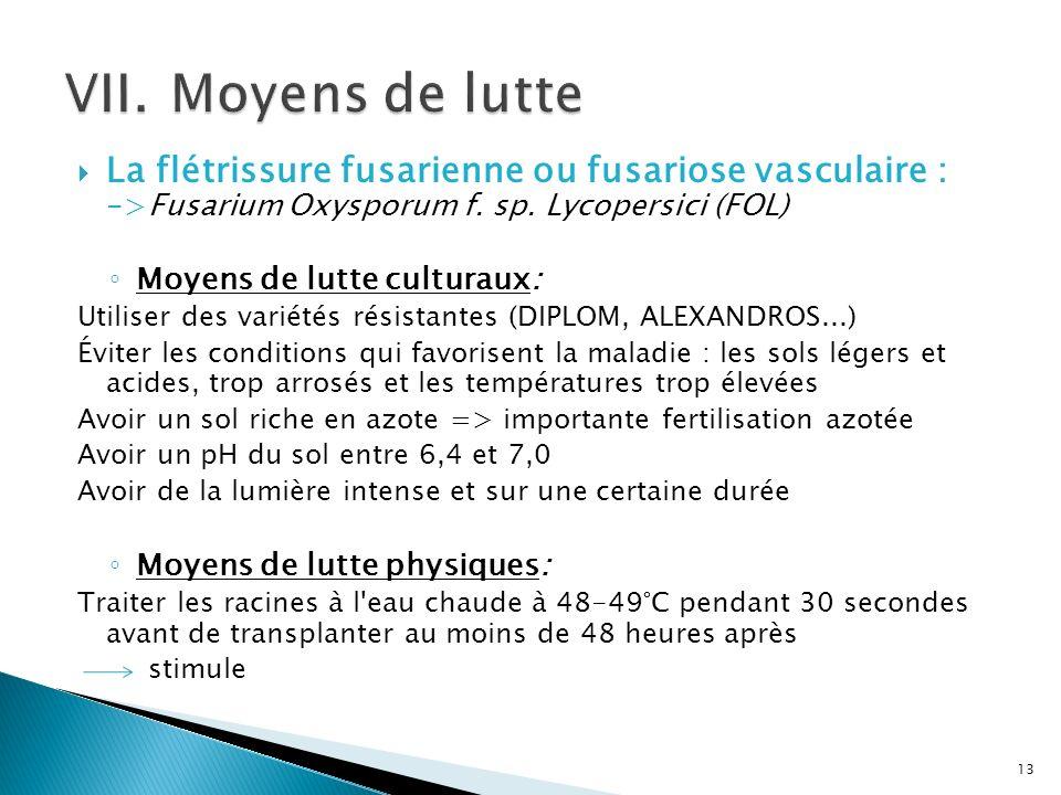 La flétrissure fusarienne ou fusariose vasculaire : ->Fusarium Oxysporum f. sp. Lycopersici (FOL) Moyens de lutte culturaux: Utiliser des variétés rés