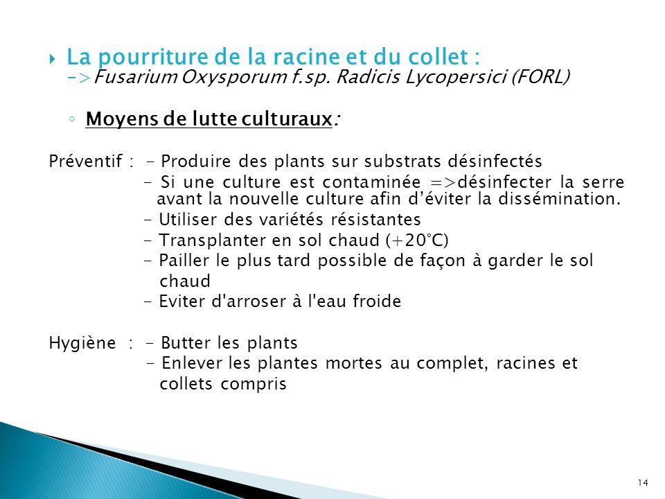 La pourriture de la racine et du collet : ->Fusarium Oxysporum f.sp. Radicis Lycopersici (FORL) Moyens de lutte culturaux: Préventif : - Produire des