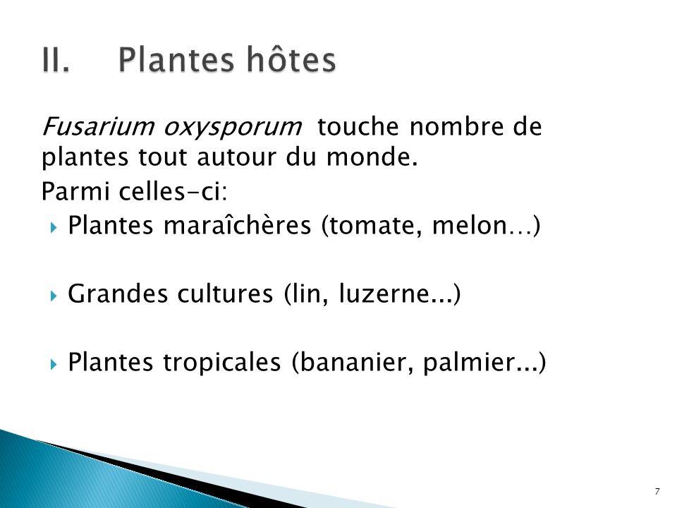 Fusarium oxysporum touche nombre de plantes tout autour du monde. Parmi celles-ci: Plantes maraîchères (tomate, melon…) Grandes cultures (lin, luzerne