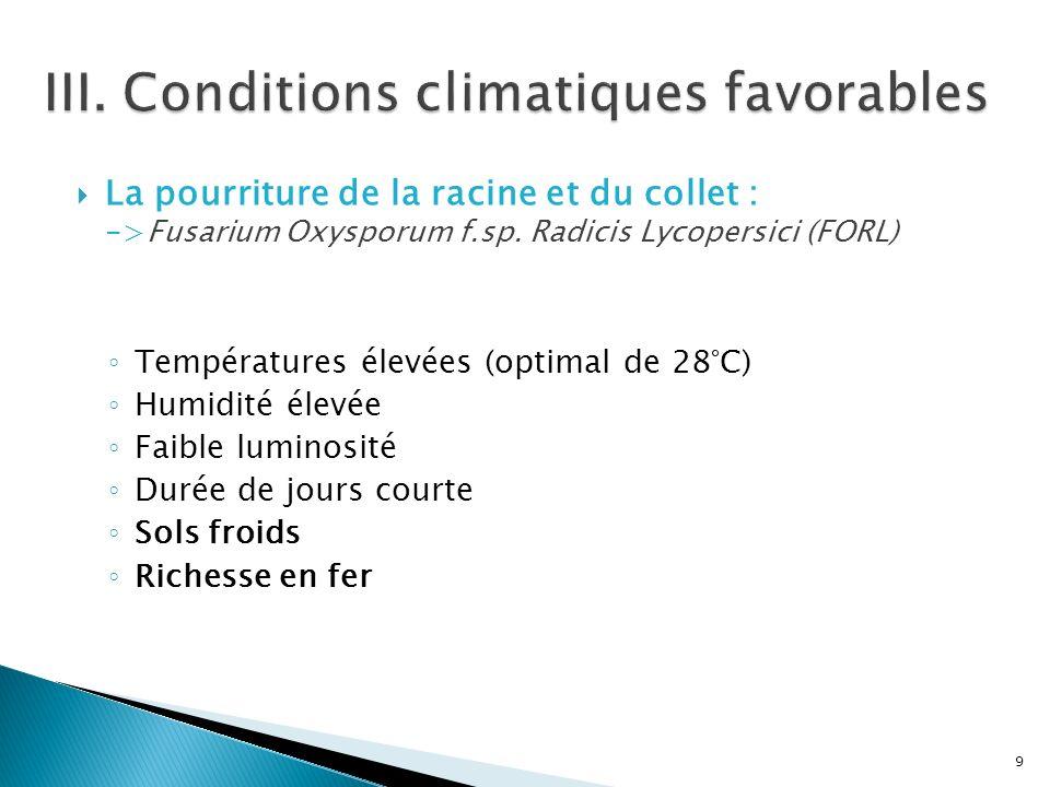 La pourriture de la racine et du collet : ->Fusarium Oxysporum f.sp. Radicis Lycopersici (FORL) Températures élevées (optimal de 28°C) Humidité élevée