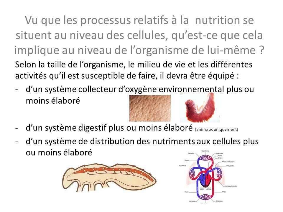 Vu que les processus relatifs à la nutrition se situent au niveau des cellules, quest-ce que cela implique au niveau de lorganisme de lui-même ? Selon