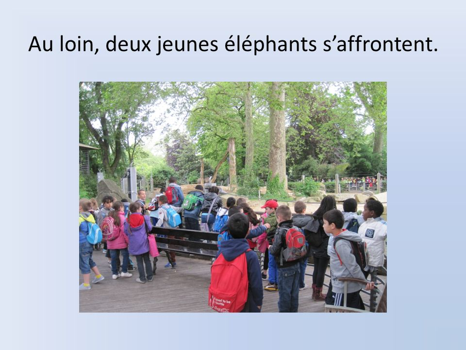 Au loin, deux jeunes éléphants saffrontent.