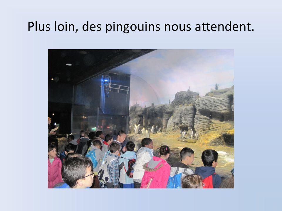 Plus loin, des pingouins nous attendent.