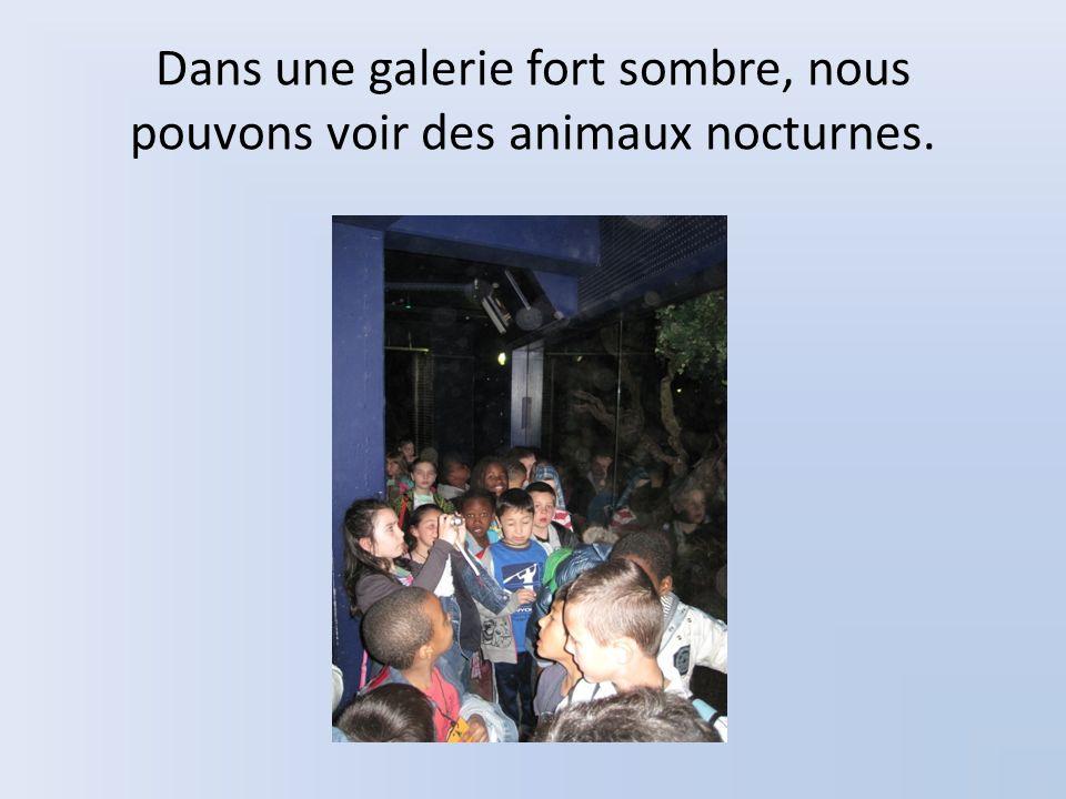 Dans une galerie fort sombre, nous pouvons voir des animaux nocturnes.