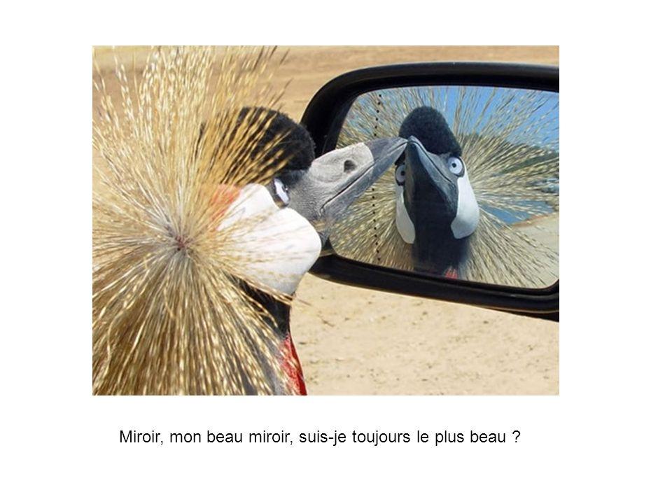 Miroir, mon beau miroir, suis-je toujours le plus beau ?