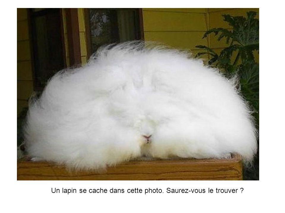 Un lapin se cache dans cette photo. Saurez-vous le trouver ?