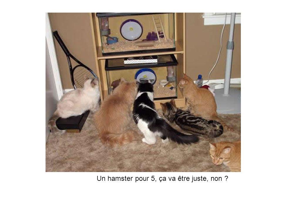 Un hamster pour 5, ça va être juste, non ?