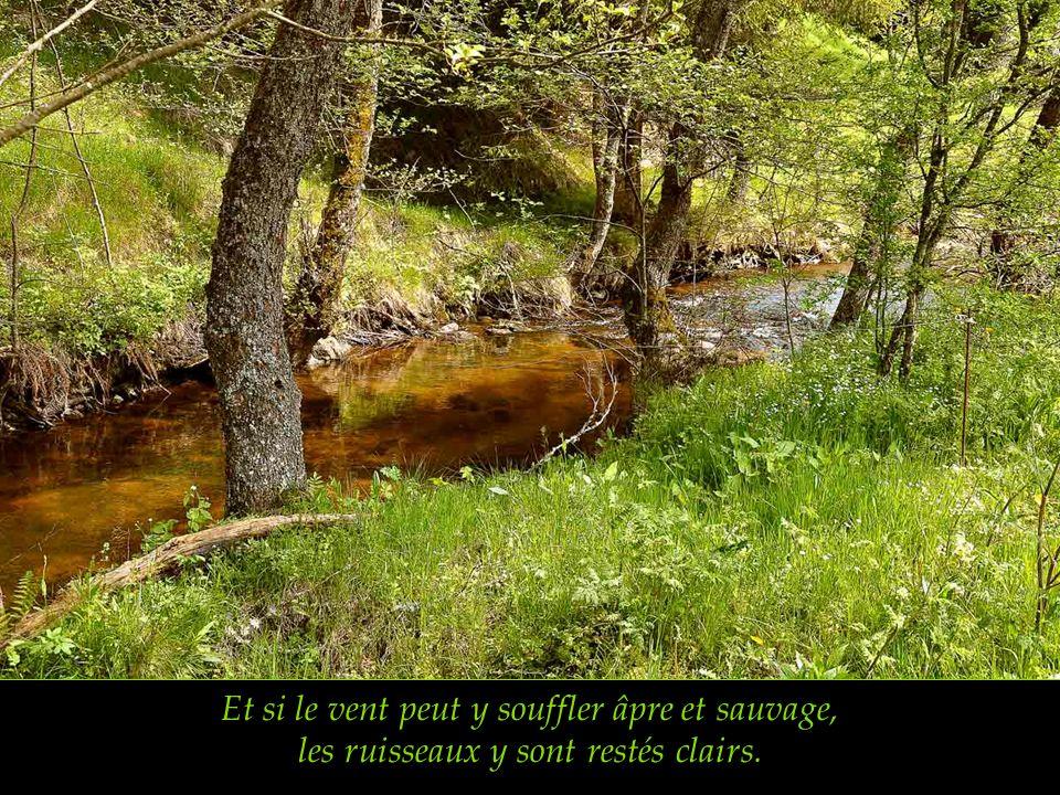 Et si le vent peut y souffler âpre et sauvage, les ruisseaux y sont restés clairs.