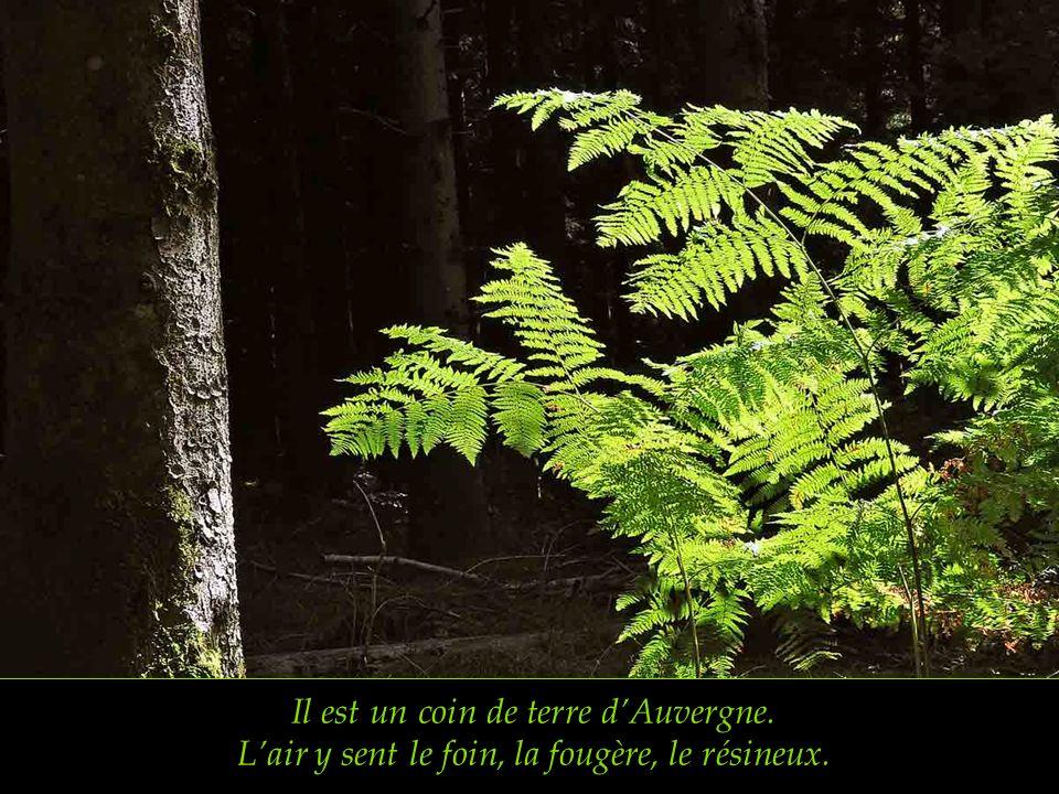 Tel est le vert pays du Livradois au Forez. la Dore