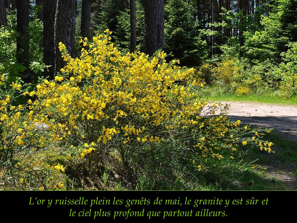 Lor y ruisselle plein les genêts de mai, le granite y est sûr et le ciel plus profond que partout ailleurs.