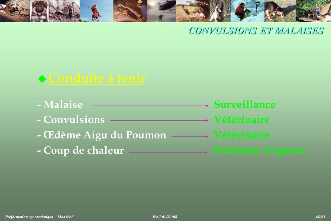 CONVULSIONS ET MALAISES u Conduite à tenir - MalaiseSurveillance - Convulsions Vétérinaire - Œdème Aigu du Poumon Vétérinaire - Coup de chaleurFraîcheur.