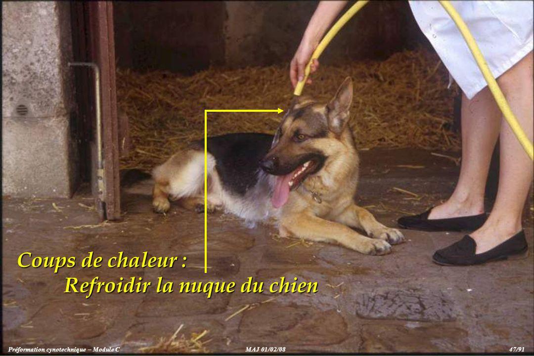 Coups de chaleur : Refroidir la nuque du chien Préformation cynotechnique – Module CMAJ 01/02/08 47/91