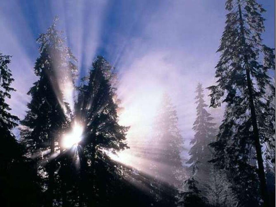 Pour cette cinquième saison dans laquelle nous sommes tous appelés : saison de plénitude et de paix, saison hors du temps et de lespace, saison dont t