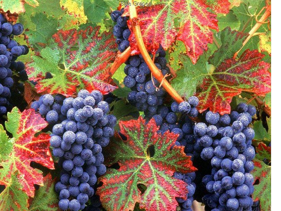 Pour les automnes que nous avons vécus, pour ces temps de récoltes où nous avons moissonné le fruit de notre travail,