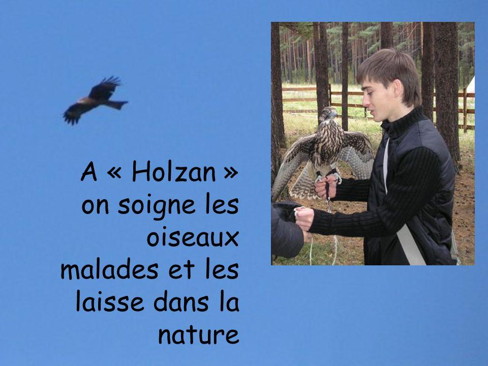 A « Holzan » on soigne les oiseaux malades et les laisse dans la nature