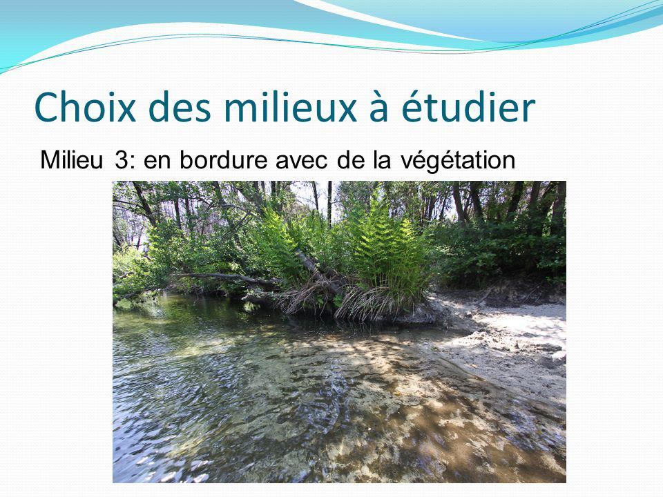 Choix des milieux à étudier Milieu 3: en bordure avec de la végétation