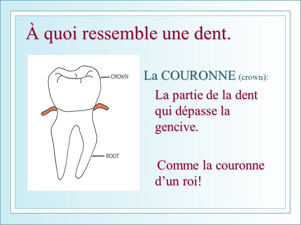 À quoi ressemble une dent. La COURONNE (crown): La partie de la dent qui dépasse la gencive. Comme la couronne dun roi! Comme la couronne dun roi!