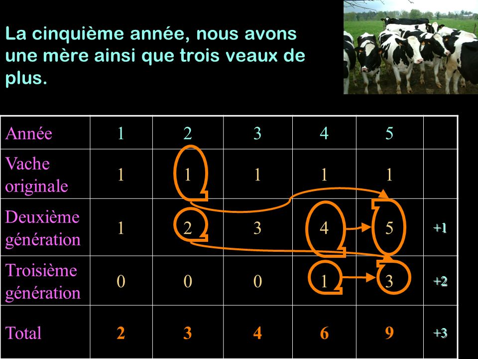 Année12345 Vache originale 11111 Deuxième génération 12345+1 Troisième génération 00013+2 Total23469+3 La cinquième année, nous avons une mère ainsi q