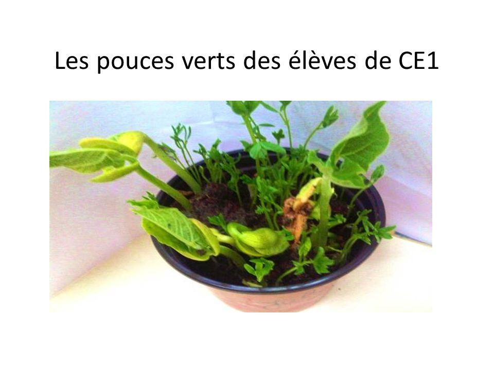 Les pouces verts des élèves de CE1