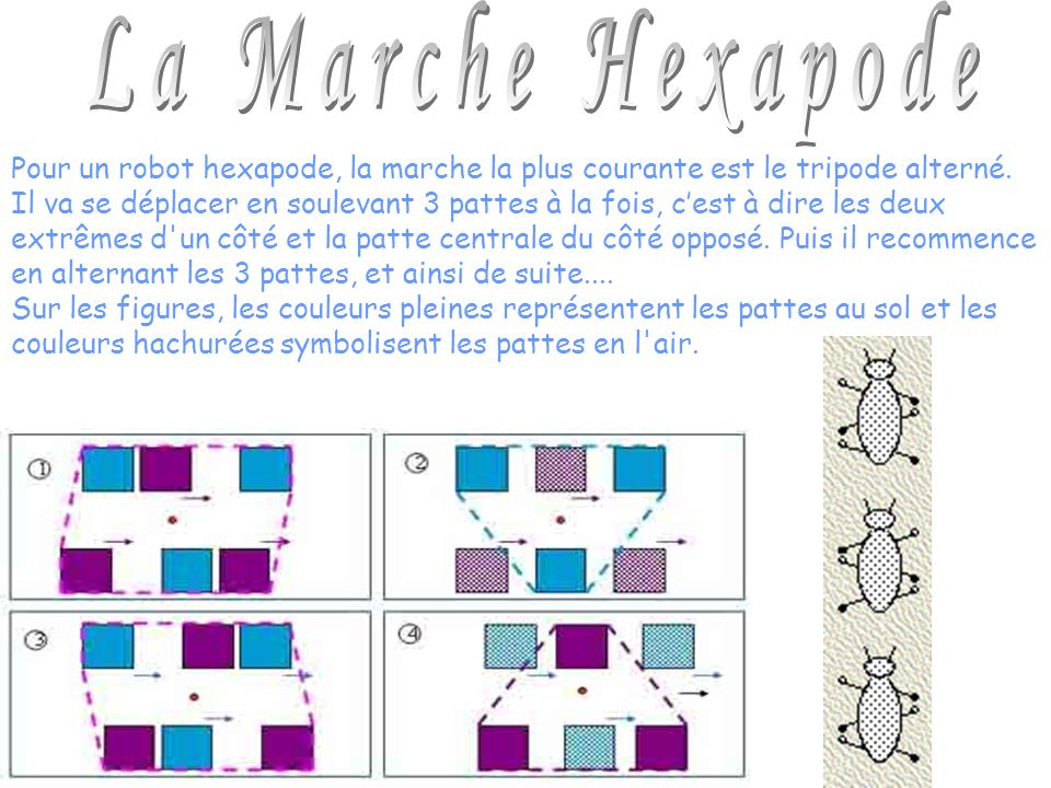 Pour un robot hexapode, la marche la plus courante est le tripode alterné. Il va se déplacer en soulevant 3 pattes à la fois, cest à dire les deux ext