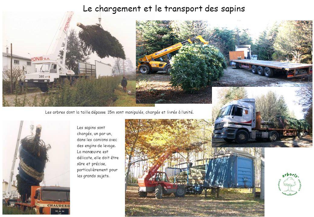 Les arbres dont la taille dépasse 15m sont manipulés, chargés et livrés à lunité. Le chargement et le transport des sapins Les sapins sont chargés, un