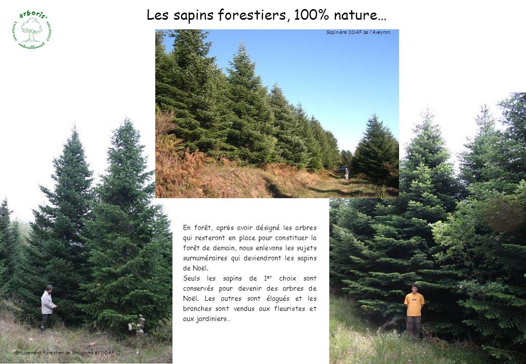 En forêt, apr è s avoir désigné les arbres qui resteront en place pour constituer la forêt de demain, nous enlevons les sujets surnuméraires qui devie