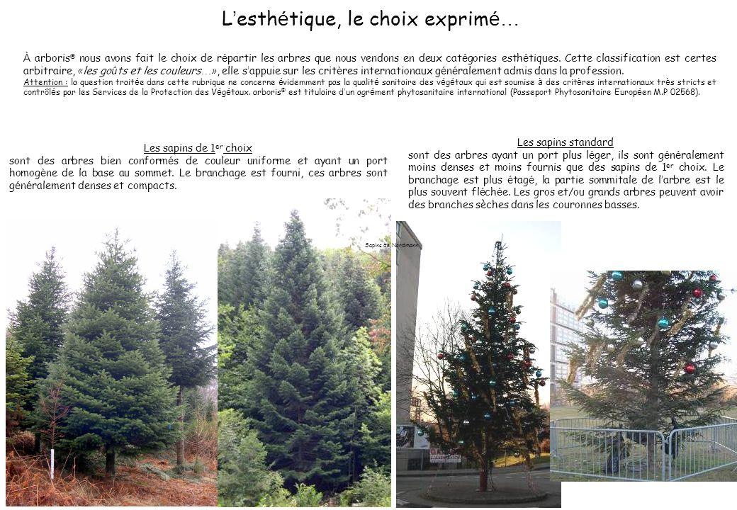 À arboris ® nous avons fait le choix de r é partir les arbres que nous vendons en deux cat é gories esth é tiques. Cette classification est certes arb