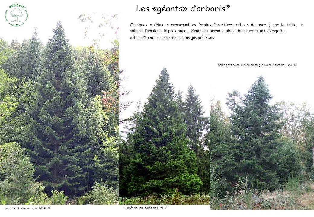 Sapin de Nordmann, 20m, DDAF 12 Les «géants» darboris ® Épicéa de 16m, forêt de lONF 81 Quelques spécimens remarquables (sapins forestiers, arbres de