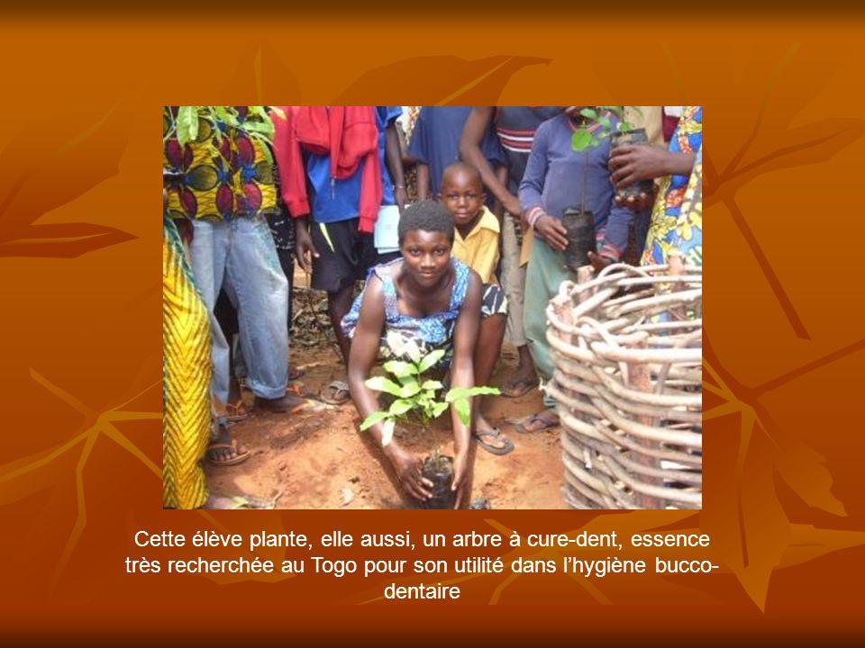 Cette élève plante, elle aussi, un arbre à cure-dent, essence très recherchée au Togo pour son utilité dans lhygiène bucco- dentaire