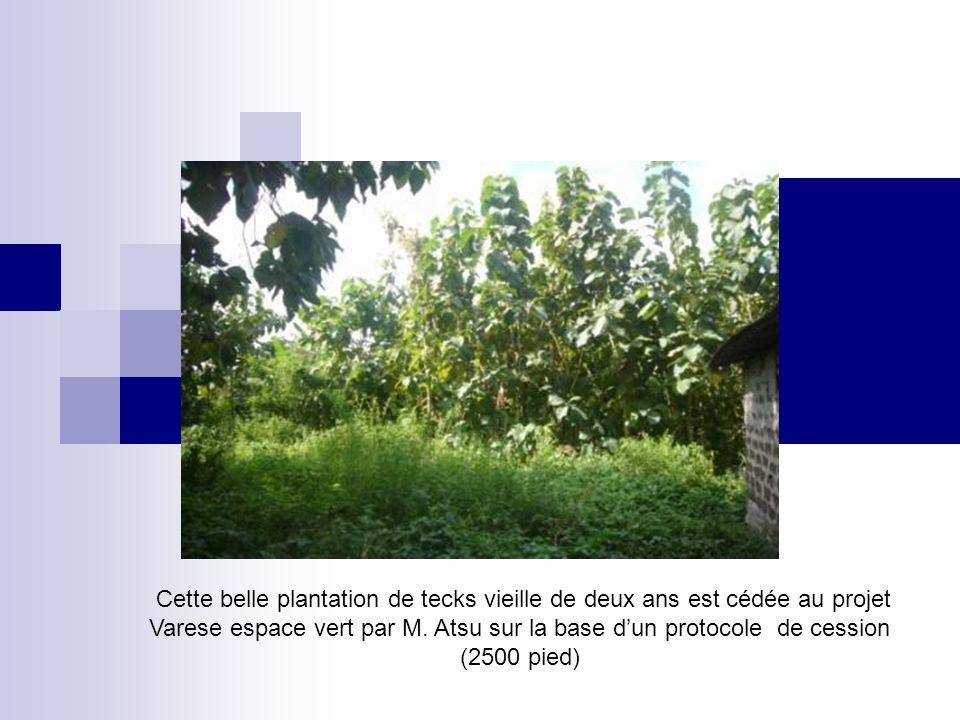 Cette belle plantation de tecks vieille de deux ans est cédée au projet Varese espace vert par M. Atsu sur la base dun protocole de cession (2500 pied