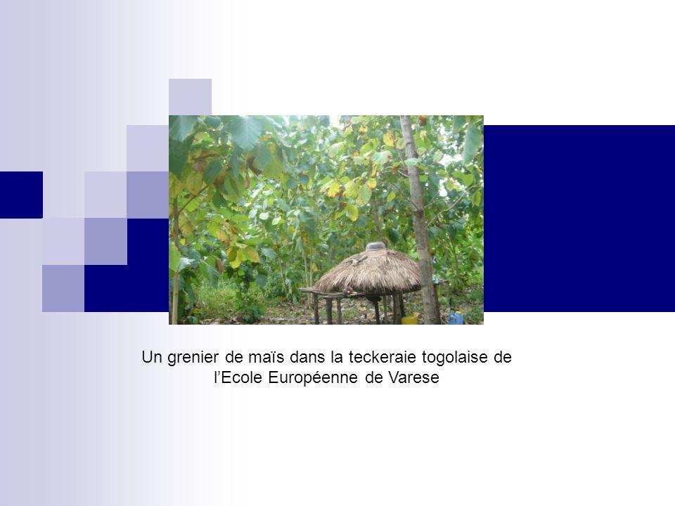 Un grenier de maïs dans la teckeraie togolaise de lEcole Européenne de Varese