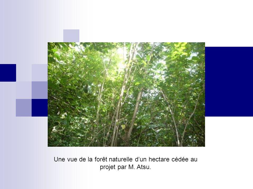 Une vue de la forêt naturelle dun hectare cédée au projet par M. Atsu.